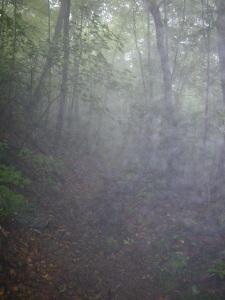 Alander Fog