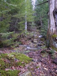 a little stream crossing