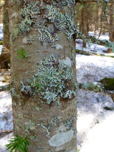 fungus artwork