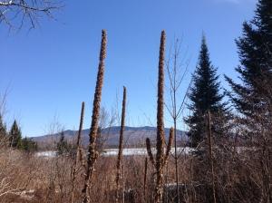 Ann's New England Cactus